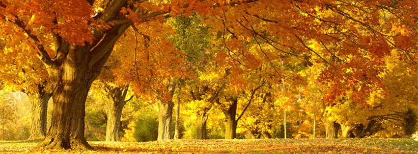 Fall / Autumn Archives | Free Facebook Covers, Facebook Timeline ...